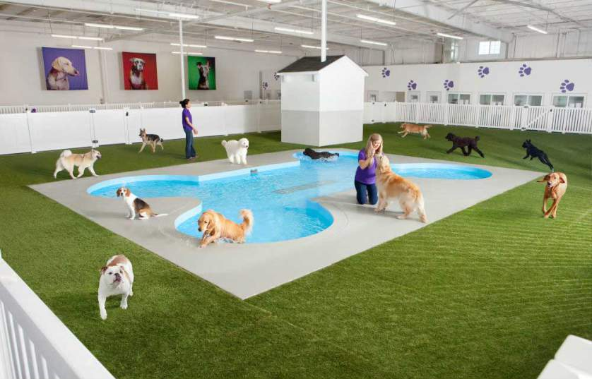 Judges from the Kennel Club, the UK's largest dog welfare organisation, have selected five inspiring finalists to go forward for the public vote, with the winner being announced in the Genting Arena at the Birmingham NEC on the final day of Crufts, the world's greatest dog show, on Sunday 11th March.