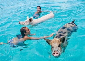 SwimmyPiggy