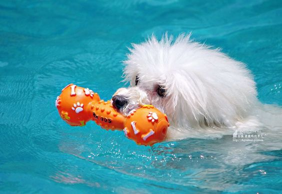 Chlorine pools can dogs swim in them premier pools spas - Protection from chlorine in swimming pool ...