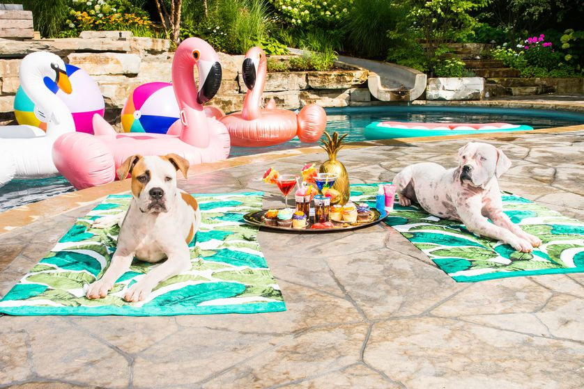 pets and the poolside