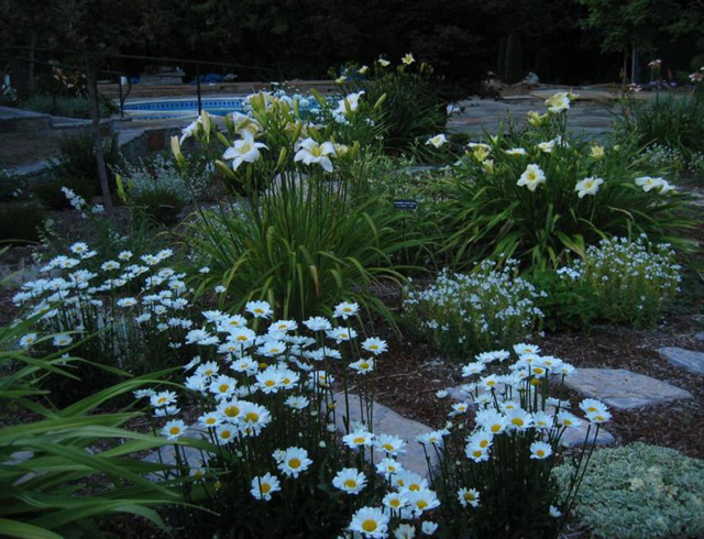 Landscape Themes for your New Backyard